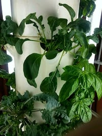 plant grower tower garden Phoenix