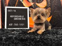 ARFordable Pet Grooming LLC Orlando