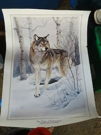 Wolf print on thicker paper Lakeport, 95453