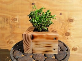 Shou Sugi Ban handcrafted planter with Succulents