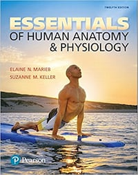 Essentials Of Human Anatomy and Physiology Vancouver