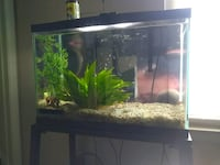 20gl aquarium with stand and two water filters