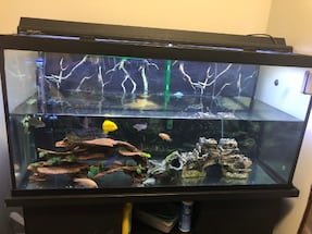 80 GALLON TANK HAS TO GO AS SOON AS POSSIBLE