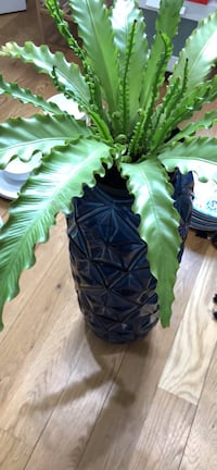 Plant stand (or umbrella holder) $50 with plant $70 New York, 11211