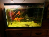 Complete with fish 20 gallon tall Chilliwack, V2P 4J7