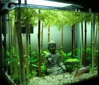 Lucky Bamboo ( Aquariums Terrariums Sumps Ponds ) Rancho Cucamonga, 91739