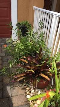 Bromeliads with pots included  Melbourne, 32940