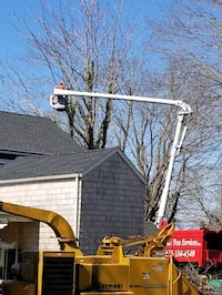 Best of the Best Tree Services  Commack