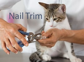 Nail trims for Pets