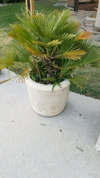green plant with white concrete pot Bakersfield, 93308