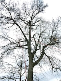 Trees service and more stump removal cleaning  houses