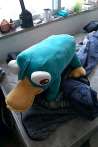 Live size Perry the platypus  Toronto, M4C 4H1