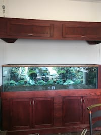800 litre Aquarium with stand Edmonton, T5Y 2W6