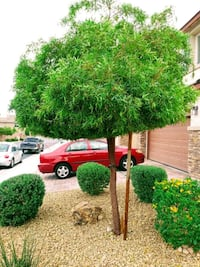 TREE trim YARD WORK LEAF BLOWING WEEDS REMOVAL Las Vegas
