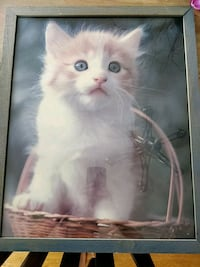 Framed kitten picture King of Prussia, 19406
