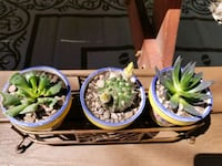 3 pots with metal stand and succulents! Albuquerque, 87113