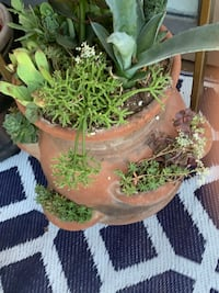 Real plants in clay pot Lakewood, 80226