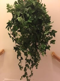 Home Décor: Hanging full Artificial Ivy Plant in deep wicker wall planter  Lansdowne