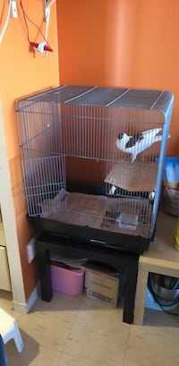 Large bird cage for sale, bird not including Mississauga, L4Y