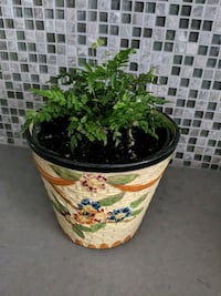 Fern with decorative ceramic pot Hampstead, H3X 1S2