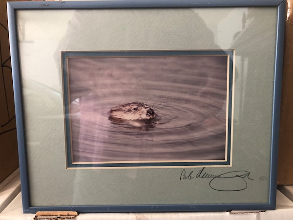 Framed Photograph of Otter c49a3a24-b343-4f49-9deb-84ae0c97b8ee