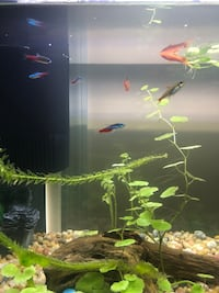 20 Gallon Fish Tank Aquarium Temple Hills, 20748