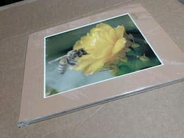 Honeybee! Original Signed Photo Print