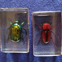 Beetles Encased (2)
