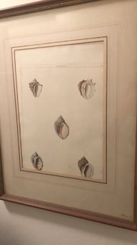 Framed watercolor of shells New York, 10021