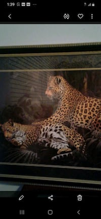 ABSOLUTELY GORGEOUS LARGE LEOPARD PICTURE  $150. Plano, 75093