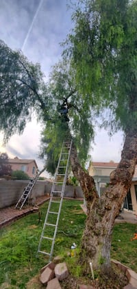 Tree trimming service Henderson, 89011