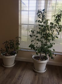 Two plants with pots included