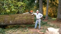 Tree Care and Tree Removal Lowell