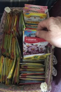 Tons of vegitable and flower seeds 75 cents per pac Lambton Shores, N0N 1J0