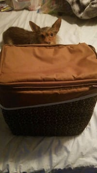 Insulated Cooler Travel Tote 641 mi