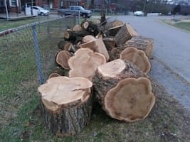 We cut our tree. Wood is free. Just come and get it.
