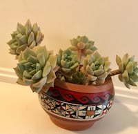 green and white succulent plants 560 km