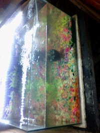 24 by 14 inch fishtank with full set