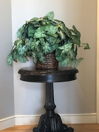 Leafy,green plant in wicker basket Clive, 50325