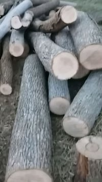 Camping wood slipt in cords. Different types of wood.  Leamington, N0P 2P0