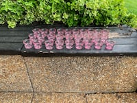 Pink tea light candles Brampton, L6W 2E5