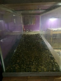 One 80 gallon fish tank and one 55 gallon fish tan London, N6C 3B2