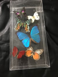 Assorted butterfly taxidermy Chantilly