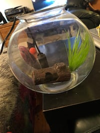Fish bowl and heater