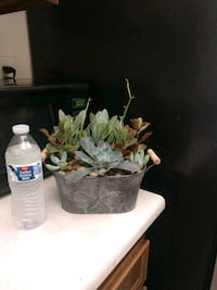 Nice galvanized container with live succulents