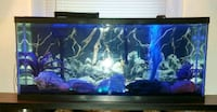55 Gallon  fish tank with supplies  Cleveland, 44111