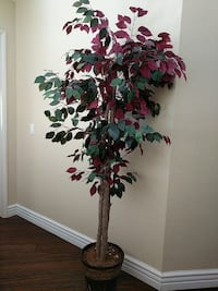 green and maroon leafed plant-- not real