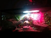 red and white fish tank 3740 km