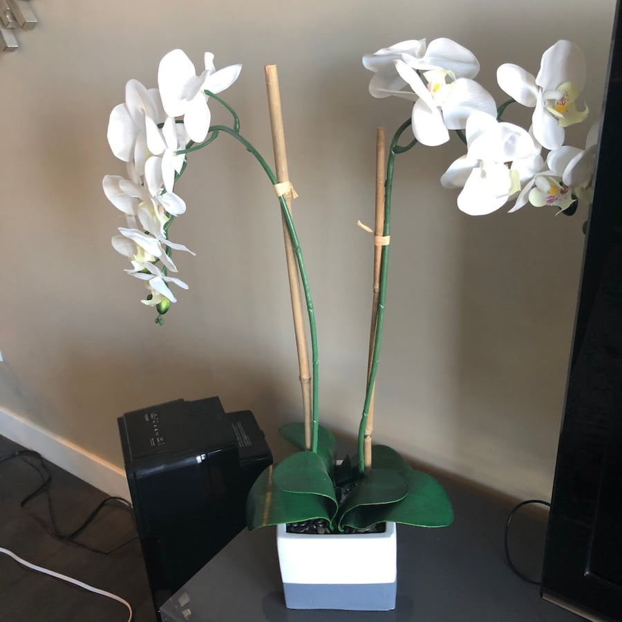 Silk Orchid Plant