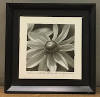 white daisy flower with quote grayscale photo with black frame Provo, 84604